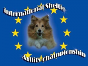 international-sheltie-agility-championship